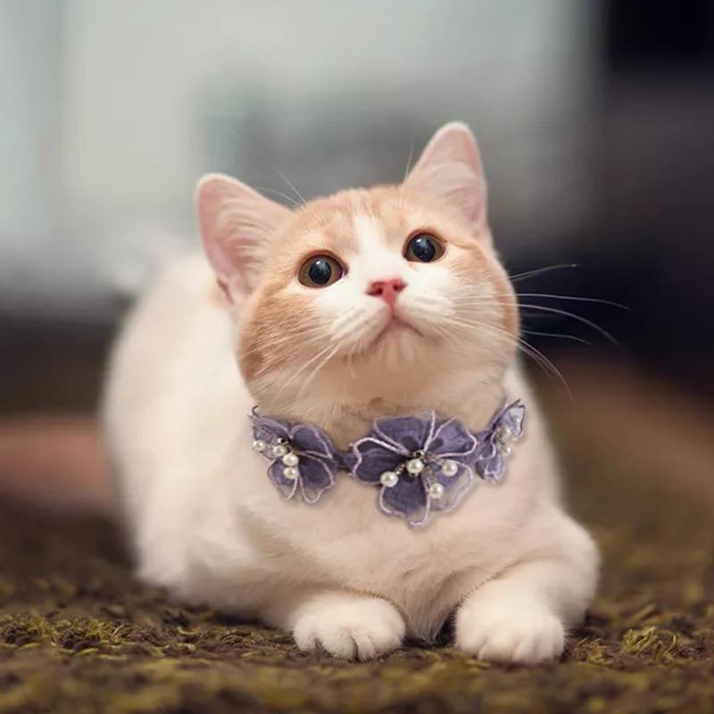 Chats chaton fleur dentelle nœud bijoux collier Teddy dentelle fleur dentelle écharpe mignon chat collier réglable stéréo fleur collier pour animaux de compagnie