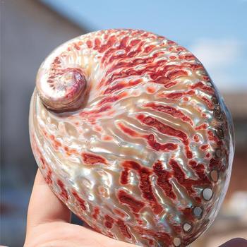 Conchas naturales pulidas de 12-13 cm, gran caja de abulón rojo brillante,...