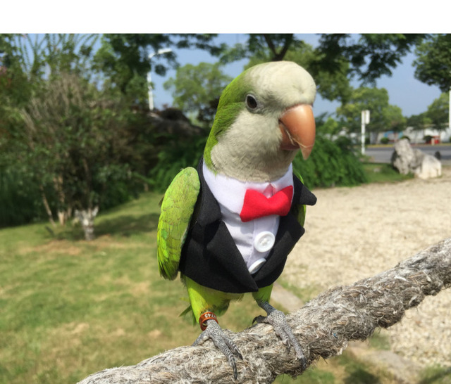 Parrot Cocktail Suit With Snazzy Bowtie  4