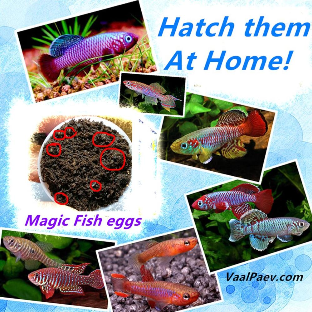 30 pieces Lots Magic Fish eggs Killifish Wholesale Magic soil Hatching earth Toys for Kids Children Aquarium Pond Amazing Funny