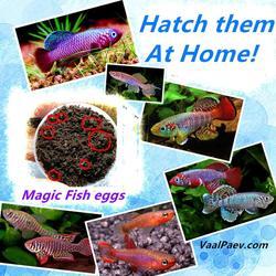 30 stück Viele Magie Fisch eier Killifish Großhandel Magie boden Schlüpfen erde Spielzeug für Kinder Kinder Aquarium Teich Erstaunliche Lustige