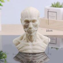 [Mgt] escultura «crânio e gesso pequeno, decoração de casa, resina de arte e artesanato, esboço, prática e escritório