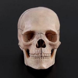Image 4 - 15 pçs/set 4D Desmontado Modelo Anatômico Crânio Destacável Ferramenta de Ensino Médico