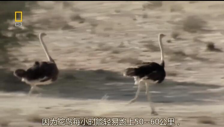 [英语中字]动物世界纪录片:史前掠食动物 Prehistoric Predators (2007) 全7集 1080P图片 No.4