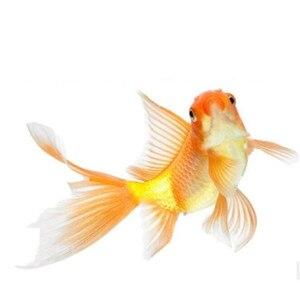 Горячие аквариум Замороженные сушеные Артемия креветки тропические маленькие морские рыбы Discus еда Tetra Betta Гуппи кои рептилия, черепаха корм для домашних животных