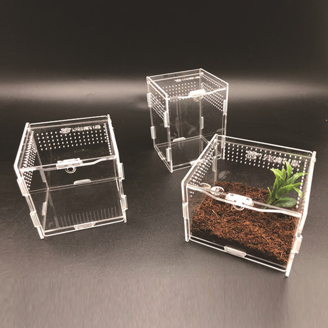 Reptile & Insect Breeding Box For Spiders Scorpions Crickets And Small Snakes. 6