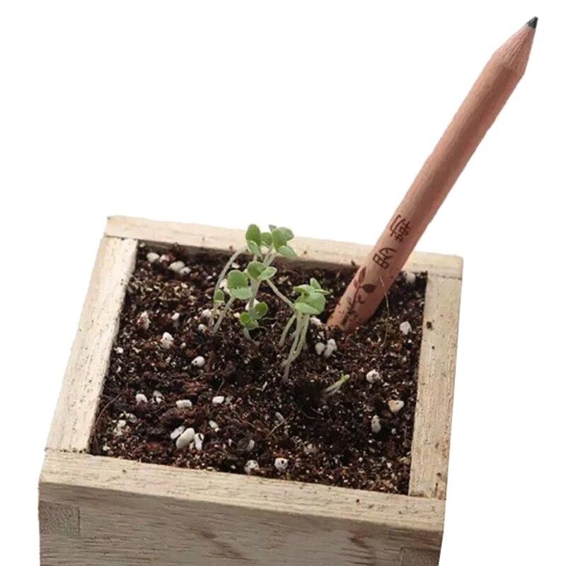 Conjunto de lápis de germinação, 8 peças, para crescer, lápis brotado, mini diy, desktop, planta em vaso, presentes especiais, lápis artístico