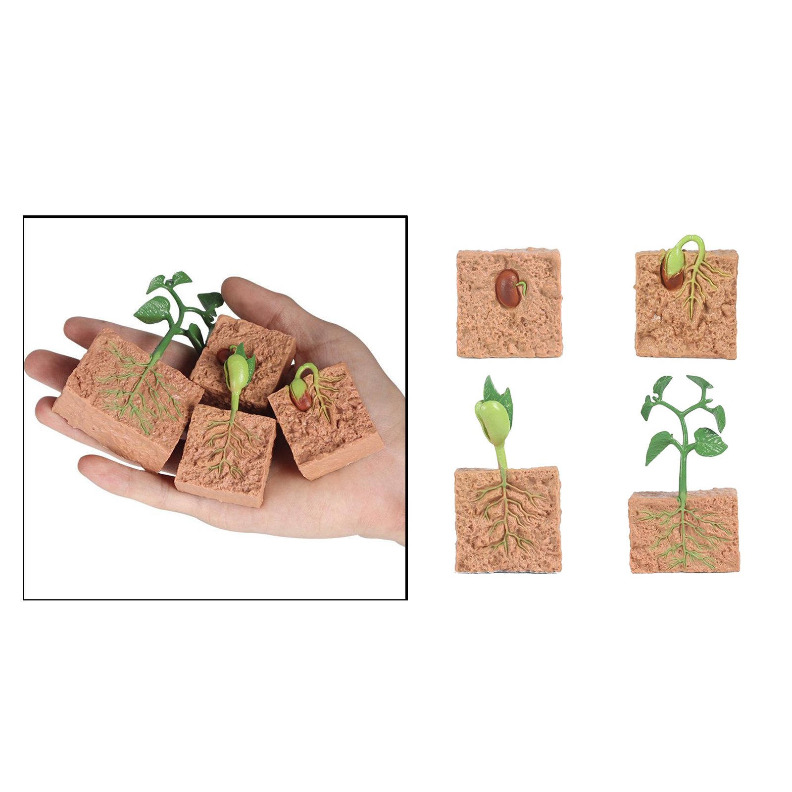 Kids Plant Seeds Growth Life Cycle Playset Cognitive Toys Teaching Aids 4