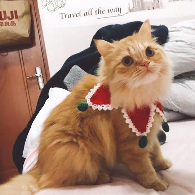 Holiday Hand-knitted Wool Cat/Dog  Collar  Bib Shawl + Hat