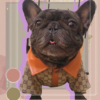 Luksusowe ubrania dla psów ubrania dla psów kurtka dla psa buldog francuski produkty dla zwierzaka domowego ubranko dla psa dla małych średnich psów New arrival tanie i dobre opinie Wszystkie pory roku