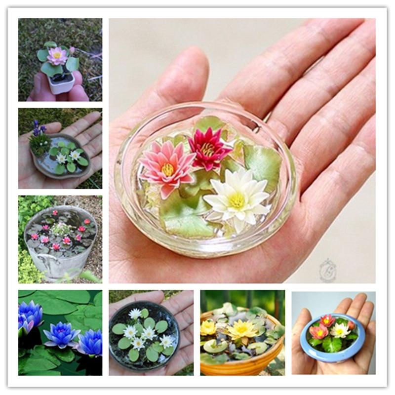 20 Pcs/Bag Lotus Flower Material Mini Lotus Bowl Lotus Water Lily Flores Perennial Plant Essential Oil  For Home Garden Decorat