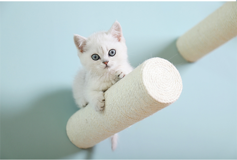 1Pc Quality Wall-Mounted Cat Climbing Furniture