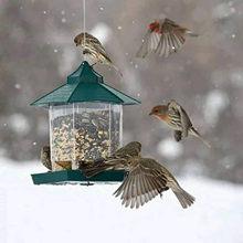Alimentador de pássaro pendurado alimentador de sementes de pássaro selvagem pesado hexagonal selado jardim sucção alimentador adsorção tipo casa alimentador de aves
