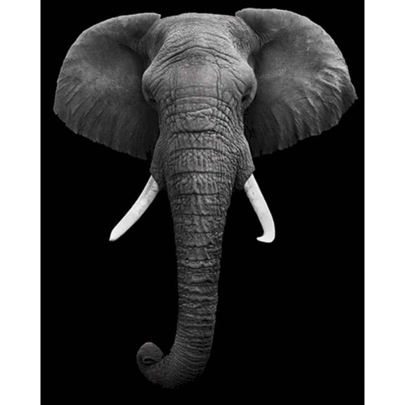RUOPOTY Animal Ivory elephant Frame Painting by Numbers DIY Full Set Acrylic Paint Unique Gift Oil Painting By Numbers Home gift-0