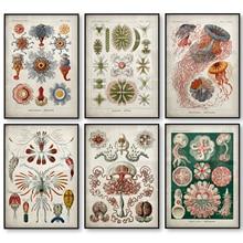 Peces Marinos póster Vintage Medusa corales algas verdes anémonas mar chorro estrellas de mar lienzo impresión arte de pared lienzo pintura
