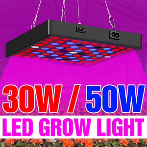 LED Grow Lamp Fitolampy For In