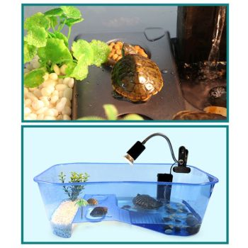 Reptile Vivarium Box For Turtles - Tortoise - Frogs - Amphibians with Basking Ramp  1