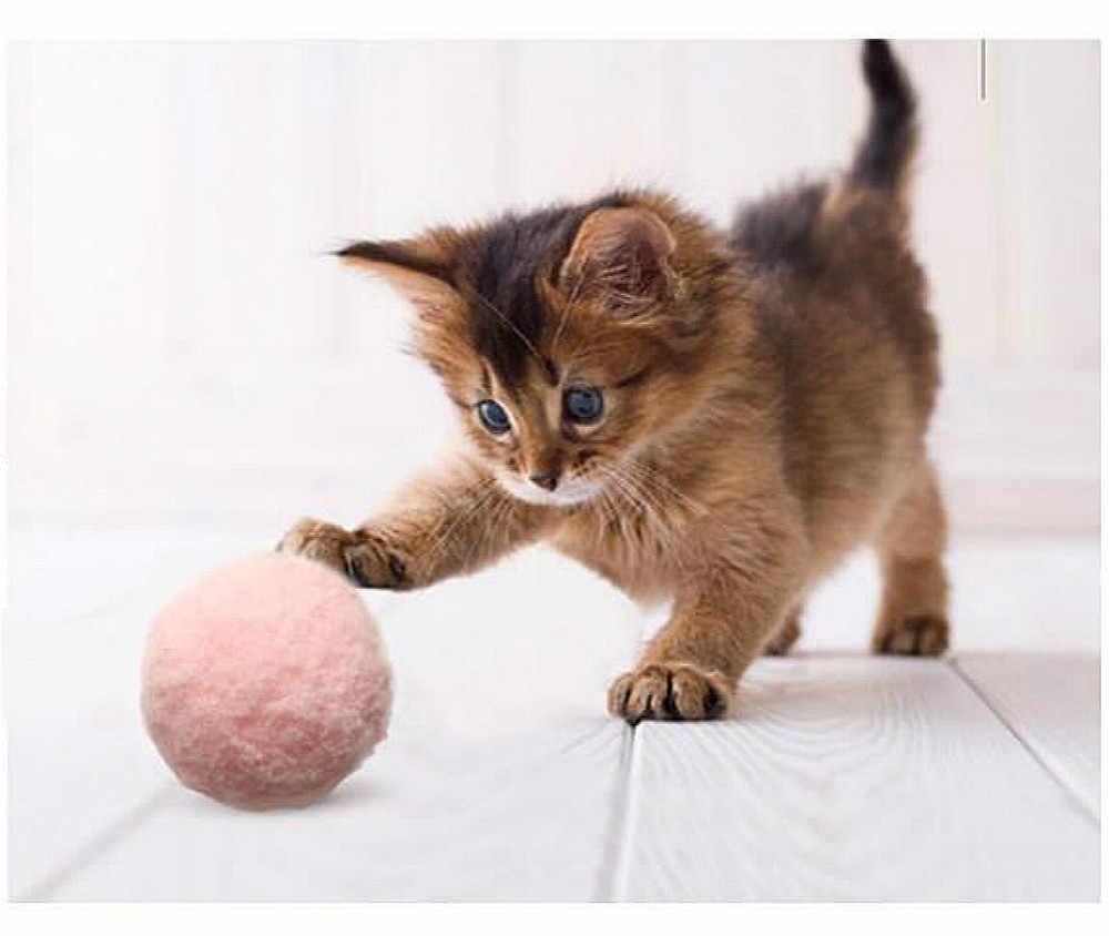 понятно, картинки котенок с мячиком большом