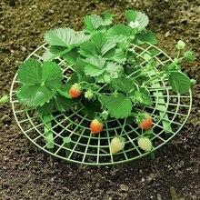 Erdbeere Unterstützt Pflanzenzucht Unterstützt Anlage Cradle Rack Halten Obst Erhöhten Zu Vermeiden Boden Rot Garten Zubehör