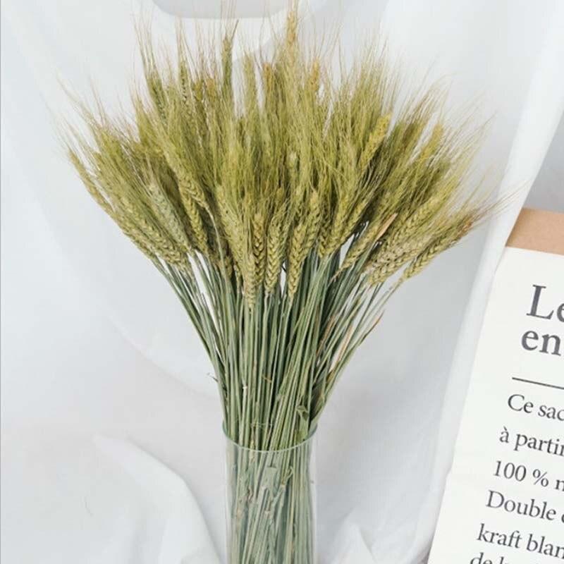 50 pces/25-30cm real natural secado trigo orelha ramo de flor, diy flores secas buquê para decoração de casa, decoração de festa de casamento