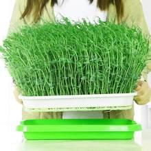 Çift katmanlı bitki tohumu filizlenme filiz tepsi bahçe mung tahıl sera buğday çimi bezelye yonca