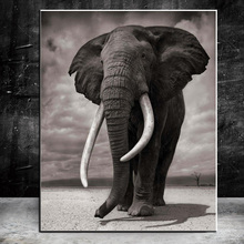 Black and White Animal Art Elephant Canvas Painting Wall Art Posters and Prints for Living Room Wall Pictures Home Wall Decor lion zebra elephant cow nordic animal posters and prints wall art canvas painting decorative pictures for living room home decor
