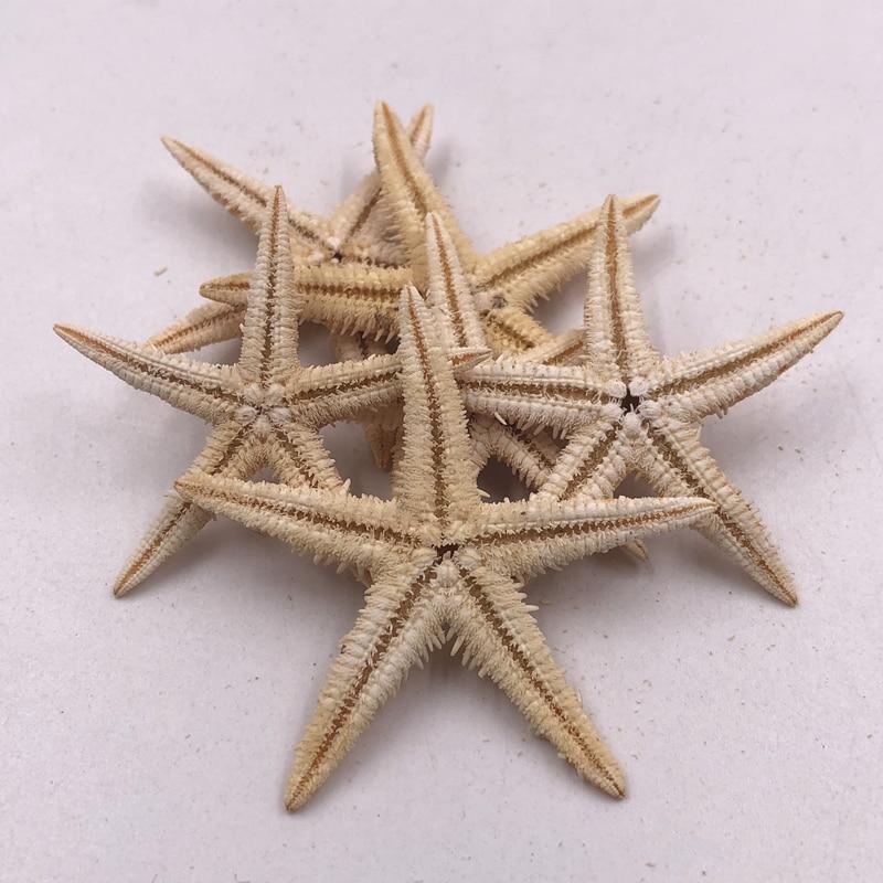 Size 4-5cm 20pcs Mini Starfish Craft Decoration Natural Sea Stars Five Finger DIY Beach Cottage Wedding Decor DIY  Wedding