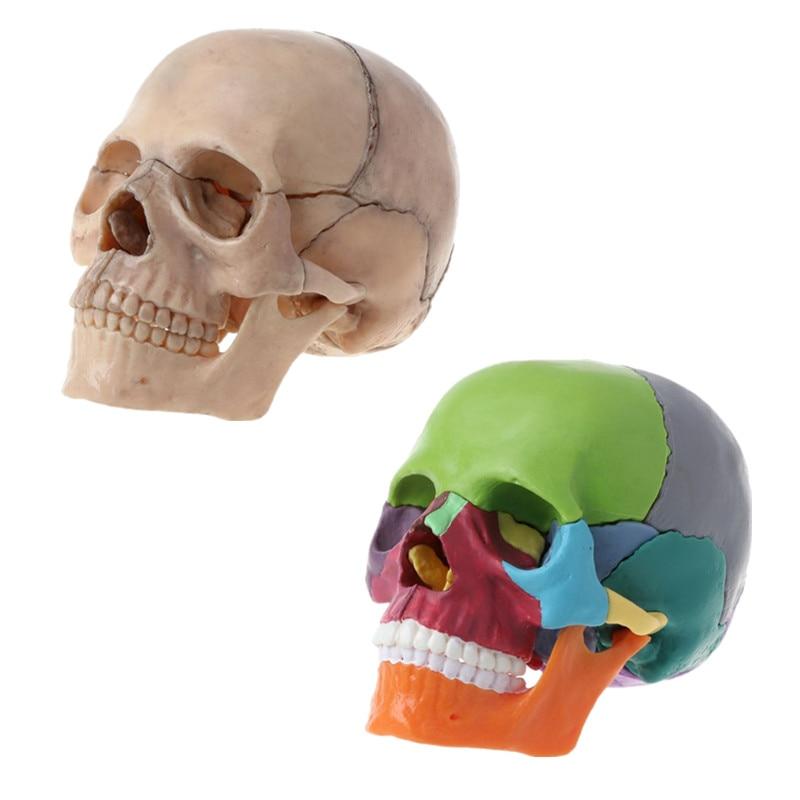 15 шт./компл. 4D разобранный цвет черепа анатомическая модель съемный медицинский учебный инструмент