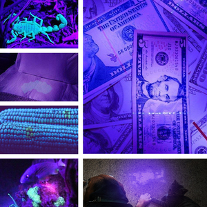 Image 5 - UV Black Light 395nm Ultraviolet Flashlight Torch Light Lantern Zoom Light Hand Lamp Pet Urine Stains Detector Scorpion Hunting