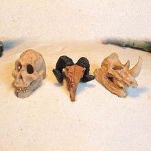 Полимерные носороги для аквариума Рогатый череп форма козьей