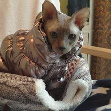 Quente stephen gato jumruist traje para gatos inverno roupas para animais de estimação gotas mascota roupas casaco de gato para baixo jaqueta disfraz para perro