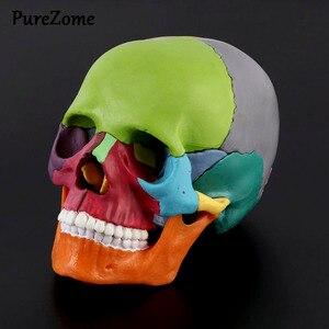 Image 1 - 15 יח\סט 4D מפורק צבע גולגולת אנטומי דגם להסרה הוראה רפואית כלי