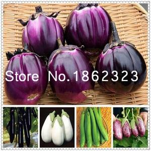 200 pcs Purple round eggplant Bonsai,Organic vegetable, Flower Potted Plant Garden Fruit And Vegetables Bonsai for Home Garden