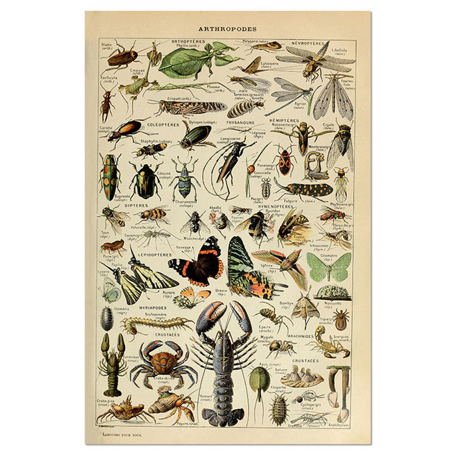 Animal-Botanical-Educational-Vintage-Poster-Butterfly-Posters-and-Prints-Fruit-Canvas-Painting-Vegetable-Picture-on-The.jpg_640x640 (8)