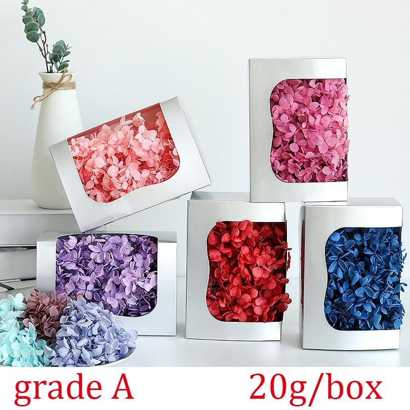 20 g/caixa natural secas hortênsia flor eterna flor preservada material diy festa de casamento decoração para casa caixa de presente decoração Flores secas artificiais    -
