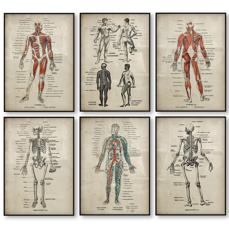Набор плакатов с анатомическим принтом, медицинский скелет, человеческое тело, мускулы, ВИНТАЖНЫЙ ПЛАКАТ, научное образование, Настенная ка...
