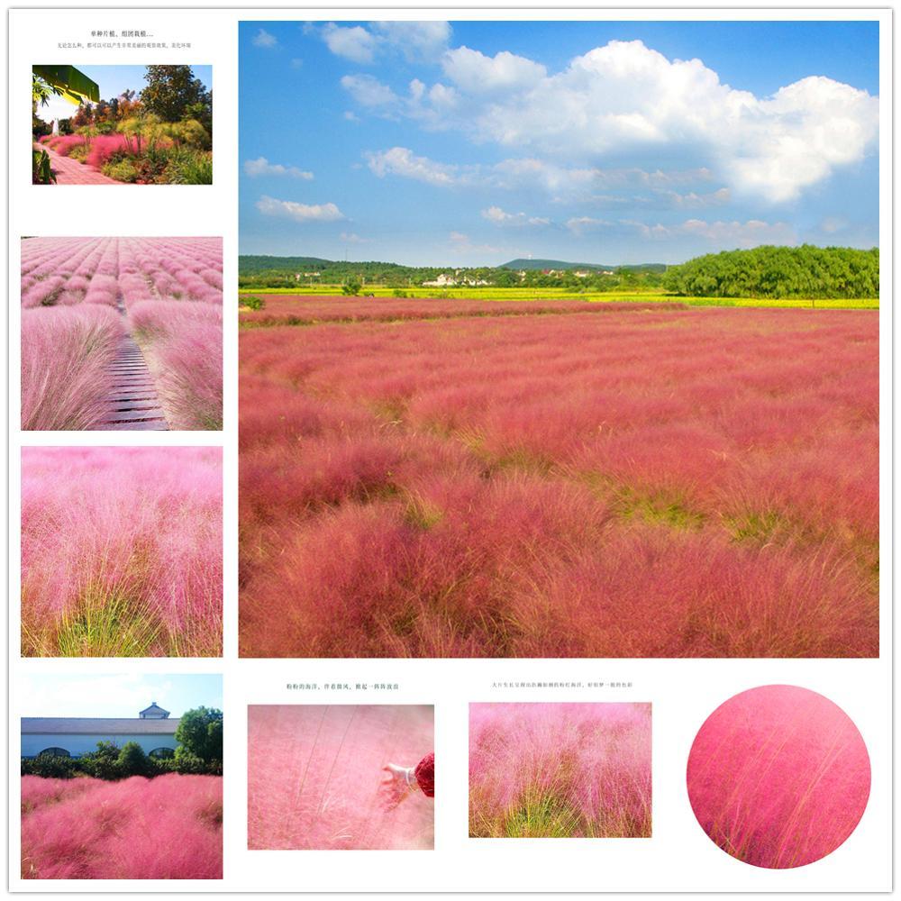 Plant Flower Bath Salts Carmine Pink Chaotic Weed Grass Essence 100Pcs XZZ-197