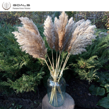 2020 New Arrival Wedding use pampas flowers bunch 100% natural  plants christmas decor dried flower bouquet for home decoration