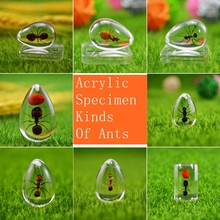 Acrylic Drops Shape Specimen of Ants (about 1*2cm) With Hole ants of egypt
