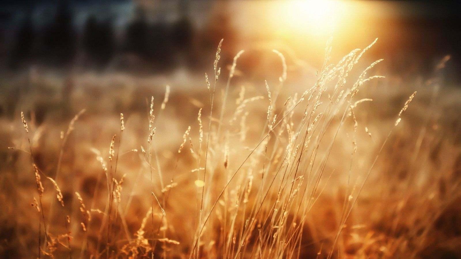 苟活像野草在心中生长插图1