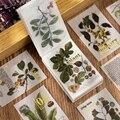 Креативные винтажные растения, иллюстрация, записная книжка, растения, цветы, блокноты для записей, прозрачная бумага с серной кислотой, лис...