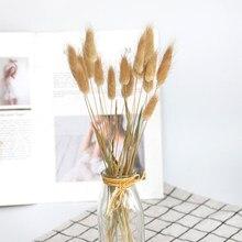 20pcs natural dried flowers lagurus white artificial flowers colorful fake rabbit tail grass ovatus foxtail bouquet long bunches