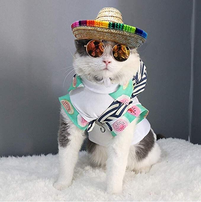 Bettli cão sombrero chapéu, gato mexicano chapéus mini palha com  multicolorido trimsombrero chapéus de festa para pequenos animais de  estimação/filhote de cachorro/gato Bonés p/ cães  - AliExpress