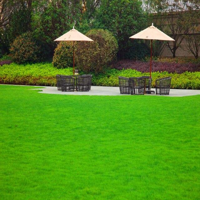 Plant Flowers Bath Salts Zoysia japonica Grass Essence 100Pcs XZZ-180 3