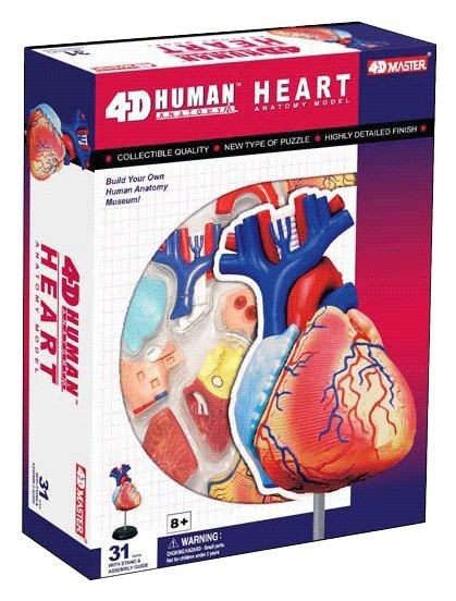 4DMASTER Human Heart Anatomy Assembly Model Biology Teaching Aid