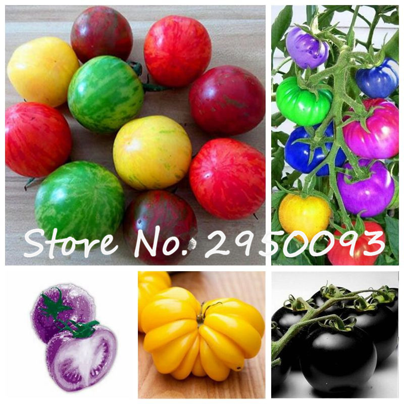 300 Pcs/bag Rainbow Tomato Bonsai, Rare Tomato Plant, Imported Organic Vegetable & Fruit Bonsai,Potted Plant For Home & Garden