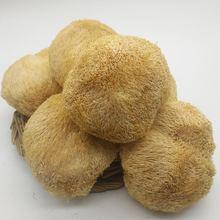 Hot sale Organic Dried Lion's Mane Bearded Tooth Mushrooms Hericium Erinaceus Fungus New  Hericium Erinaceus, Good Quality