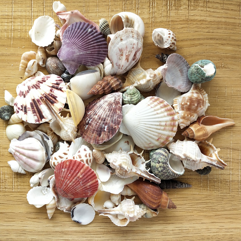 100PCS Mixed Ocean Sea shells Wedding Decor Beach Theme Party, Seashells Home Decorations, Fish Tank, sea star 5