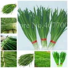 300 шт./пакет китайский лук Everygreen без ГМО вкусный сочный порей огород завод для цветочного горшка кашпо легко растить