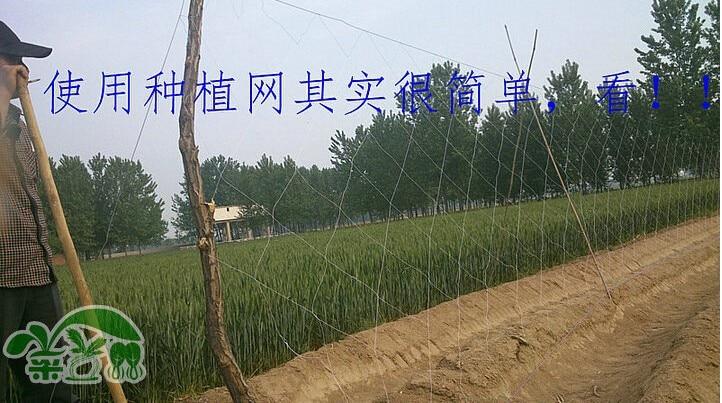 Yam cucumber net planting net climbing nets Tetrastigma.1.8*18M.hole size 24cm*24cm,garden supplies